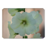 Pretty White Hollyhock Card