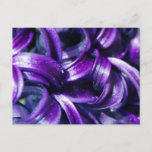 Purple Hyacinth Flower Postcard