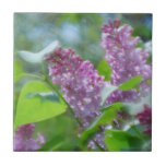 Purple Lilac Flowers Tile