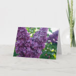 Purple Lilacs Greeting Card