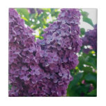 Purple Lilacs  Tile