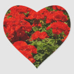 Red Geraniums Stickers