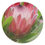 Red Protea Melamine Plate