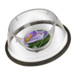 Striped Crocus Bowl