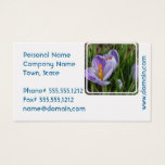 Striped Crocus Business Card