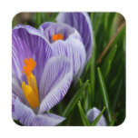 Striped Crocus Coaster