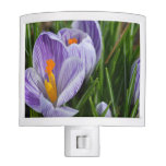 Striped Crocus Night Light