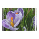 Striped Crocus Placemat