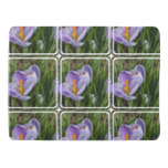 Striped Crocus Receiving Blanket