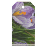 Striped Crocus Wooden Gift Tags