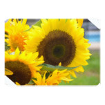 Sunflowers in Bloom Card
