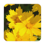 Yellow Coreopsis Coaster