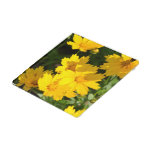 Yellow Coreopsis Glass Coaster