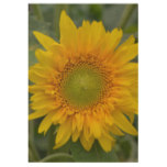 Yellow Coreopsis Wood Poster
