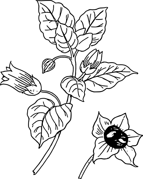 Flower on easter lily coloring pages